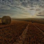 Anticipazione contributi PAC e finanziamenti dedicati all'agricoltura: la proposta di BPER Banca