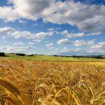 """Imprese, Confagricoltura: """"Più investimenti e semplificazione per la competitività dell'agricoltura italiana"""""""