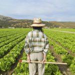 Lavoratori stagionali, da oggi si possono presentare le richieste: pubblicato il nuovo decreto flussi